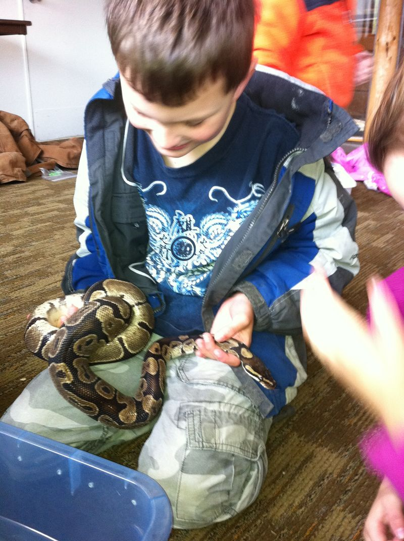 Constrictor Snake at Camp Seymour