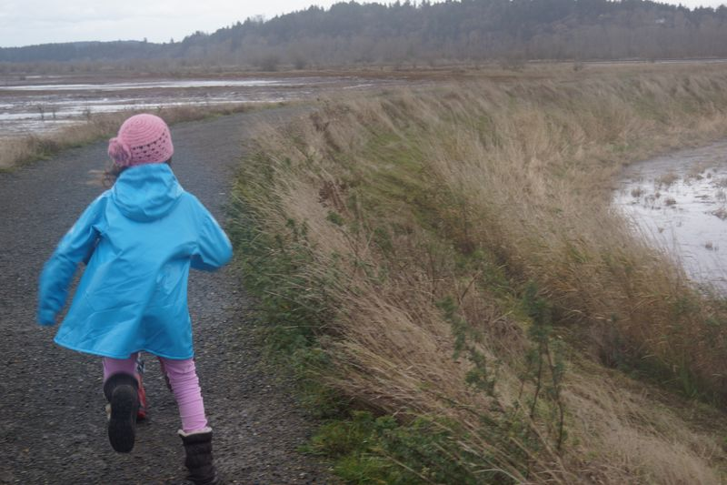 Nisqually Wildlife Refuge
